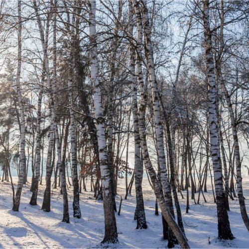 1129_natura